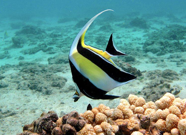 Cinque tra i pesci pi belli del mondo cinque cose belle for Immagini di pesci disegnati
