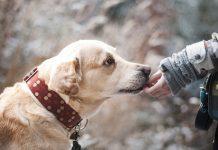 Le migliori e più commoventi frasi sui cani e sui loro padroni