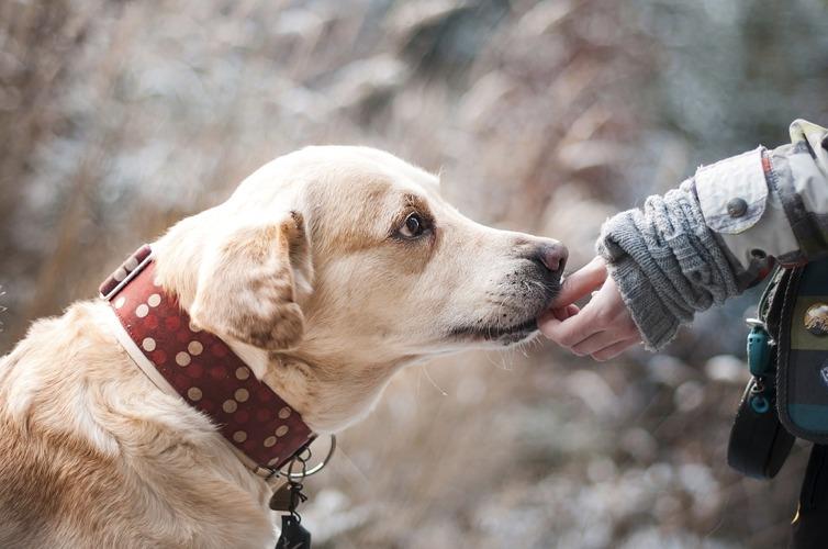 Cinque Commoventi Frasi Sui Cani Cinque Cose Belle