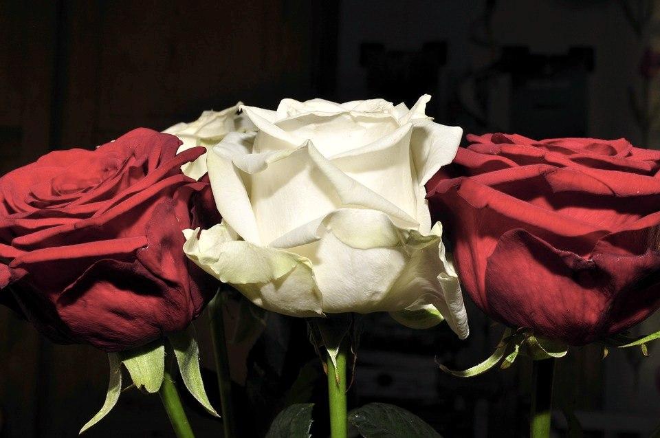 Un mazzo di fiori con rose rosse e bianche