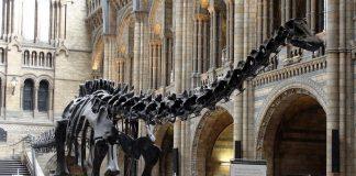 Il Diplodocus del Museo di Storia Naturale di Londra (foto di Drow Male via Wikimedia Commons)