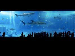 Alla scoperta di cinque tipi di squali