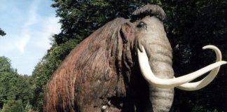 La ricostruzione di un mammut, uno dei più famosi animali preistorici, effettuata dal Naturkunde und Mammut Museum di Siegsdorf