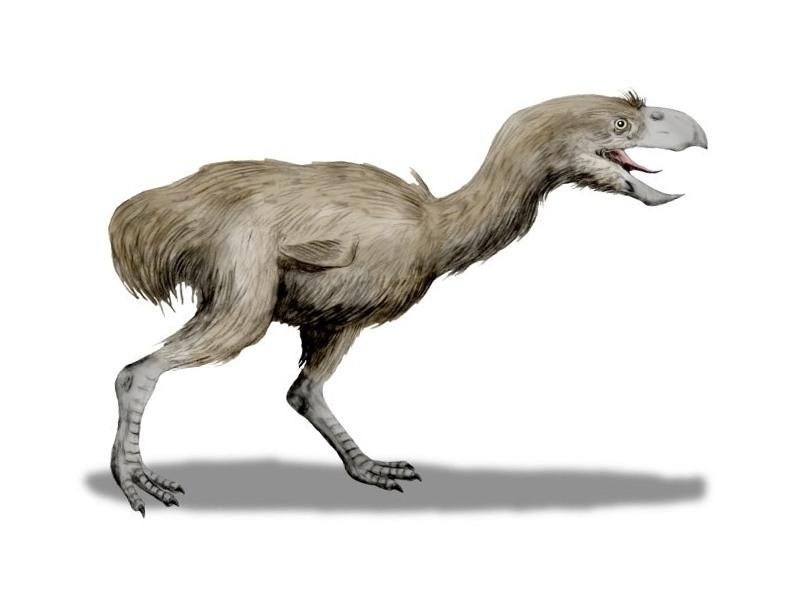 Un uccello del terrore rappresentato da Nobu Tamura (via Wikimedia Commons)