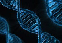 Il DNA e la sua struttura