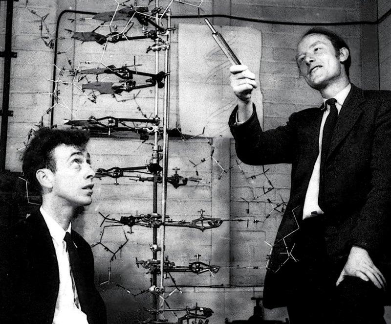 Watson e Crick, autori del celebre articolo sul DNA comparso su Nature nel 1953