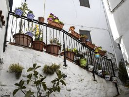 Le piante da balcone per un orto urbano