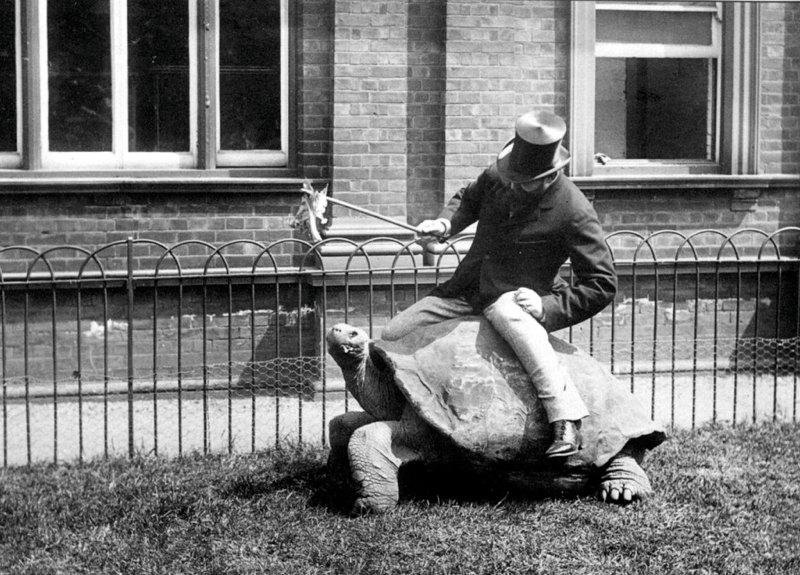 Lionel Walter Rothschild addirittura a cavallo di una tartaruga gigante