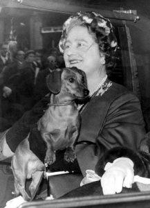 La regina madre inglese negli anni '50 con il suo bassotto