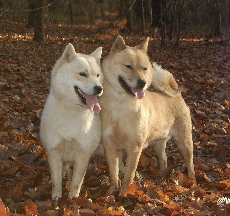 Una coppia di Hokkaido (foto di Magdalena Niemiec via Wikimedia Commons)