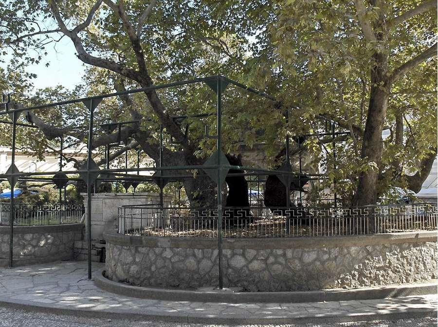 L'albero di Ippocrate a Kos (foto di Steven Fruitsmaak via Wikimedia Commons)