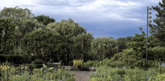 Le piante da giardino sempreverdi