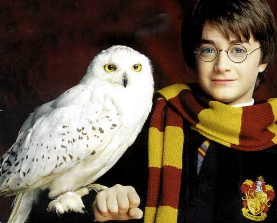 Harry Potter ed Edvige