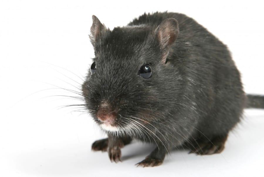 I topi giocano a nascondino