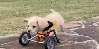 Una sedia a rotelle realizzata coi Lego