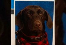 Tosha, il cane che ha avuto l'onore di comparire nell'annuario scolastico