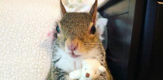Lo scoiattolo Jill col suo orsacchiotto