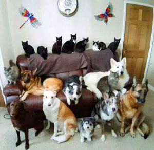 La foto di Kathy Smith con i 17 animali domestici