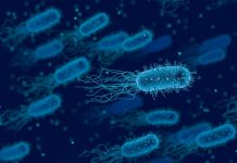 Un gruppo di batteri