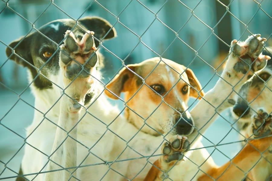 Alcuni cani in un canile