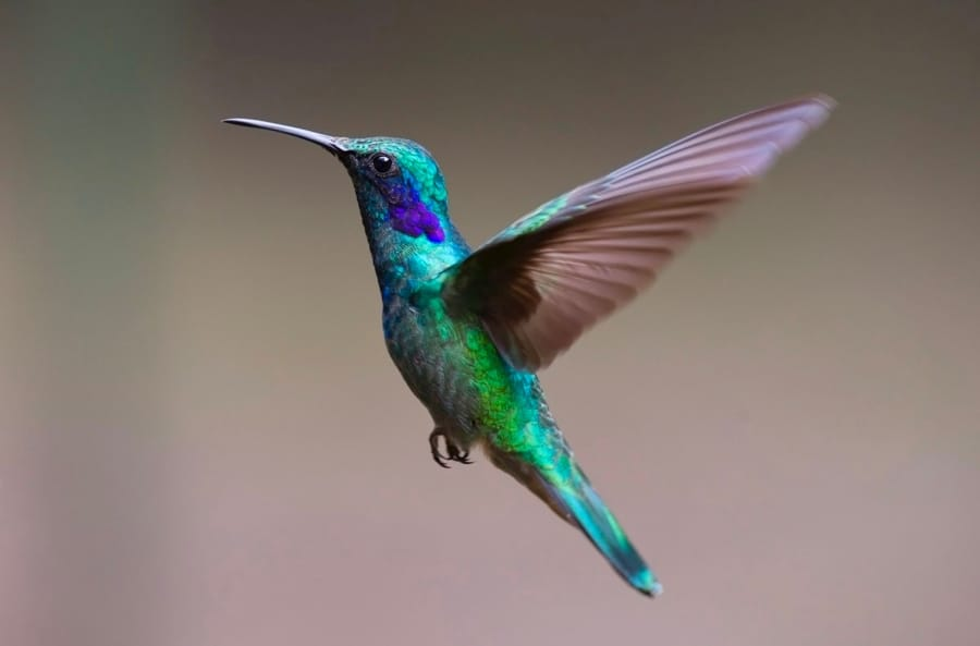 I colori e i colibrì